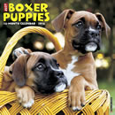 Just Boxer Puppies 2016 Calendar