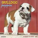 Just Bulldog Puppies 2016 Calendar