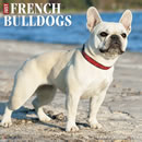 Just French Bulldogs 2016 Calendar