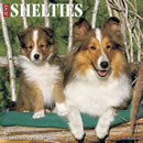 Just Shelties 2016 Calendar