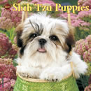 Just Shih Tzu Puppies 2016 Calendar