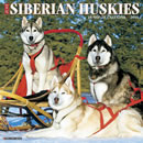 Just Siberian Huskies 2016 Calendar