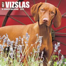Just Vizslas 2016 Calendar