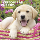 Just Yellow Lab Puppies 2016 Calendar