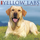 Just Yellow Labs 2016 Calendar