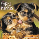 Just Yorkie Puppies 2016 Calendar