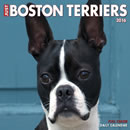 Just Boston Terriers 2016 Daily Box Calendar